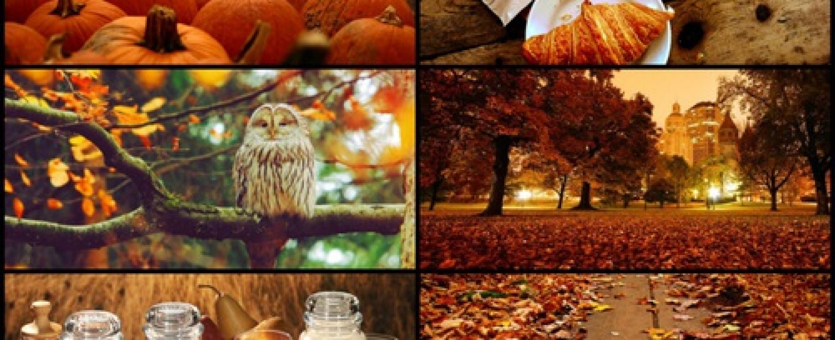 Autumn is Not a Fall Per Se